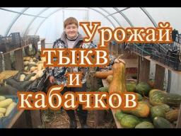 Юлия Минаева -  Тыквы и кабачки. Урожай 2016 года.