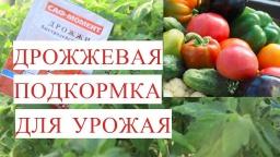Юлия Минаева - Подкормка Дрожжами для Отличного Урожая