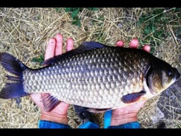 Ловля крупного карася улов на 18 кг