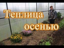 Юлия Минаева -  Теплица осенью.| Using greenhouse in autumn.