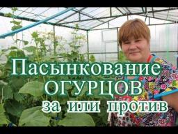 Юлия Минаева -  Огурцы в теплице. Пасынкование огурцов: за или против.  (15.06.16 г. )