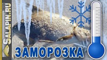 Заготовки на зиму как правильно заморозить рыбу грибы ягоды salapinru