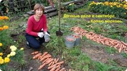 Ольга Уголок -  Дачный обзор. Урожай моркови. Цветы радости и солнца.