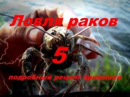 Ловля раков на раколовки 5 Рецепт приманки | Дневник рыболова
