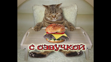 Приколы с котами и смешная озвучка животных ДО СЛЁЗ про котов от PSO