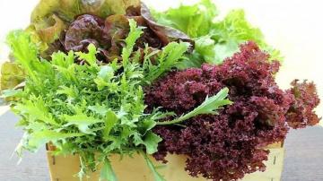 Огород где все растет 287. Как посеять салат. Проверенные способы для разных ситуаций.