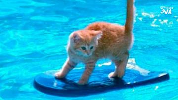 Приколы с Котами Смешные коты и кошки 2018