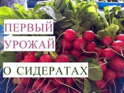 Юлия Минаева -  Первый Урожай в Теплице Сидераты Весной в Теплице 22.04.2017