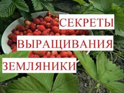 Юлия Минаева\Секреты Крепкой и Здоровой Рассады Земляники 22.04.2017