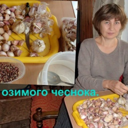 Ольга Уголок - Подготовка и посадка озимого зимнего чеснока