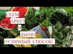 Юлия Минаева Рассада Арбуза Рассада Дыни Отличный Способ Посева на Рассаду