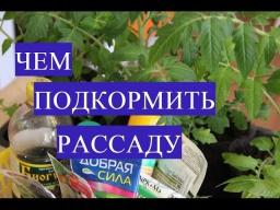 Юлия Минаева - Осторожно Избегайте Ошибок Чем Подкормить Рассаду