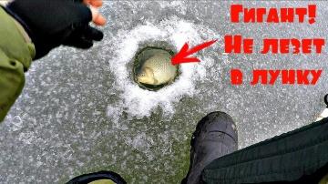 Это капец Караси не пролазят в лунку Зимняя рыбалка с Михалычем