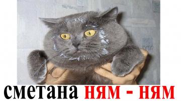 Приколы с Котами и Собаками   Смешные коты и собаки 2018   Смешные Животные   Приколы с Животными