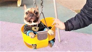 Смешные Собаки Приколы про Собак Приколы с Собаками Видео Приколы с Животными 2018