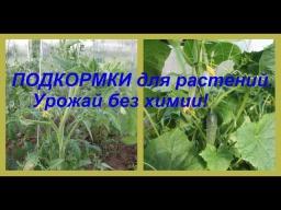 Юлия Минаева ПОДКОРМКИ для растений Урожай без химии