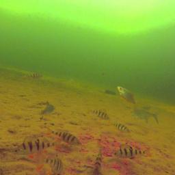 Зимняя Прикормка в действии, Подводные съемки