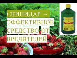 Юлия Минаева -  Скипидар - Эффективное Средство От Вредителей 27.05.2017