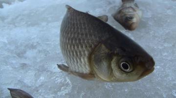 Зимняя рыбалка 2015✔ (Дневник рыболова)