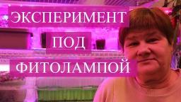 Юлия Минаева -  Фитолампы. Результаты экспериментального выращивания.