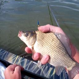 Рыбалка на карася удочкой.