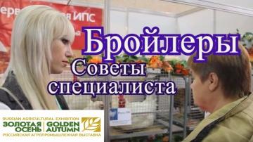 Юлия Минаева Куры бройлеры. Советы по разведению с Выставки Золотая Осень 2016.