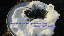 Юлия Минаева -  Тонкости посадки лука-чернушки.Супер сорт лука!
