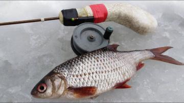 Зимняя ловля плотвы секреты рыбалки