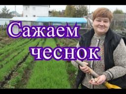 Юлия Минаева - Посадка чеснока под зиму