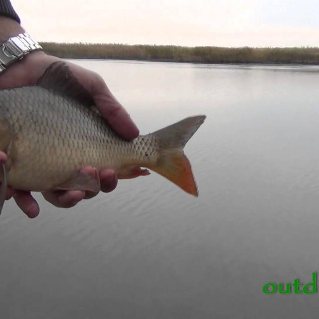 Рыбалка в октябре. Ловля карася и карпа