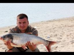 Рыбалка и отдых на реке Дон(Дневник рыболова)
