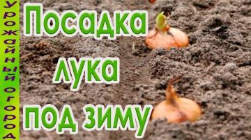Урожайный огород СЕКРЕТЫ ПОСАДКИ ЛУКА ПОД ЗИМУ!НАДЕЖНЫЕ СПОСОБЫ!