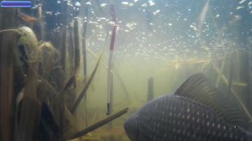 Ловля карася. Подводное видео.