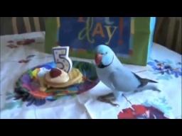 Попугаю на День рождения купили торт и позвали гостей. Его радости не было предела!