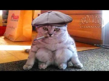 Смешные Коты и Кошки 2017 Приколы с Котами и Кошками 2017 Лучшие Приколы с Котами #10