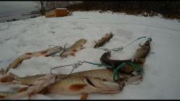 Десногорские щуки - Первый снег | Простая рыбалка
