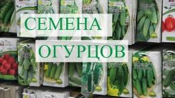 Юлия Минаева -  Семена Огурцов. Подготовка к проекту. (02.12.16)