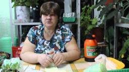 Юлия Минаева - Непременно их посадите!И вы не пожалеете! Лук-порей и базилик.