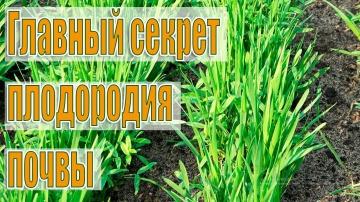Урожайный огород Проще не бывает!Как Улучшить ПЛОДОРОДИЕ и СТРУКТУРУ ПОЧВЫ без Навоза и Удобрений!