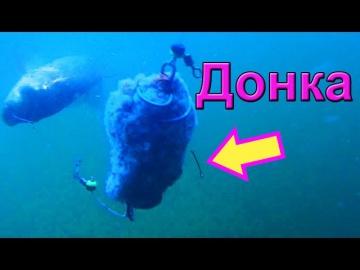 Ловил на донку. Подводная съемка, рыбалка онлайн. Ловля карася. Fishing