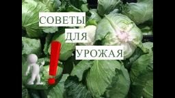 Юлия Минаева -  Выращивание Капусты. Это Должен Помнить Каждый!