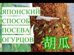 Юлия Минаева Японский Способ Выращивания Огурцов Супер Быстрые Всходы