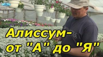 Сад Огород своими руками АЛИССУМ- ОТ ПОСЕВА ДО ЦВЕТЕНИЯ В ОДНОМ ВИДЕО!
