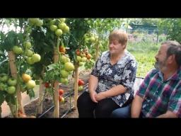 Юлия Минаева -  Выращивание Томатов Советы Агронома Урожайные Томаты