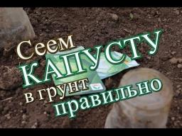 Юлия Минаева -  Как правильно посеять капусту в грунт. (17.05.2016)