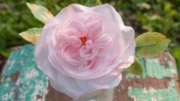Английская роза из вафельной бумаги Я ТОРТодел
