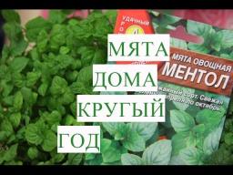 Юлия Минаева Мята Дома Круглый Год | Сеем Мяту на Рассаду