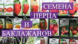 Юлия Минаева - Семена Перца Семена Баклажанов Подготовка к проекту 02.12.16