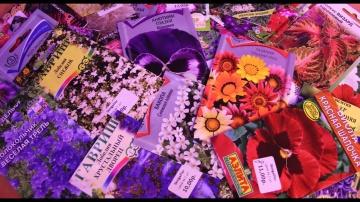 Юлия Миняева Что Посеять В Марте Как Посеять Когда Посеять Цветы
