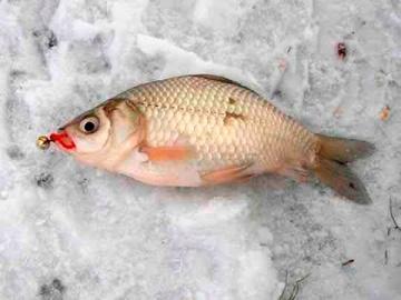 Зимняя рыбалка на карася со льда | Уроки ловли от профи